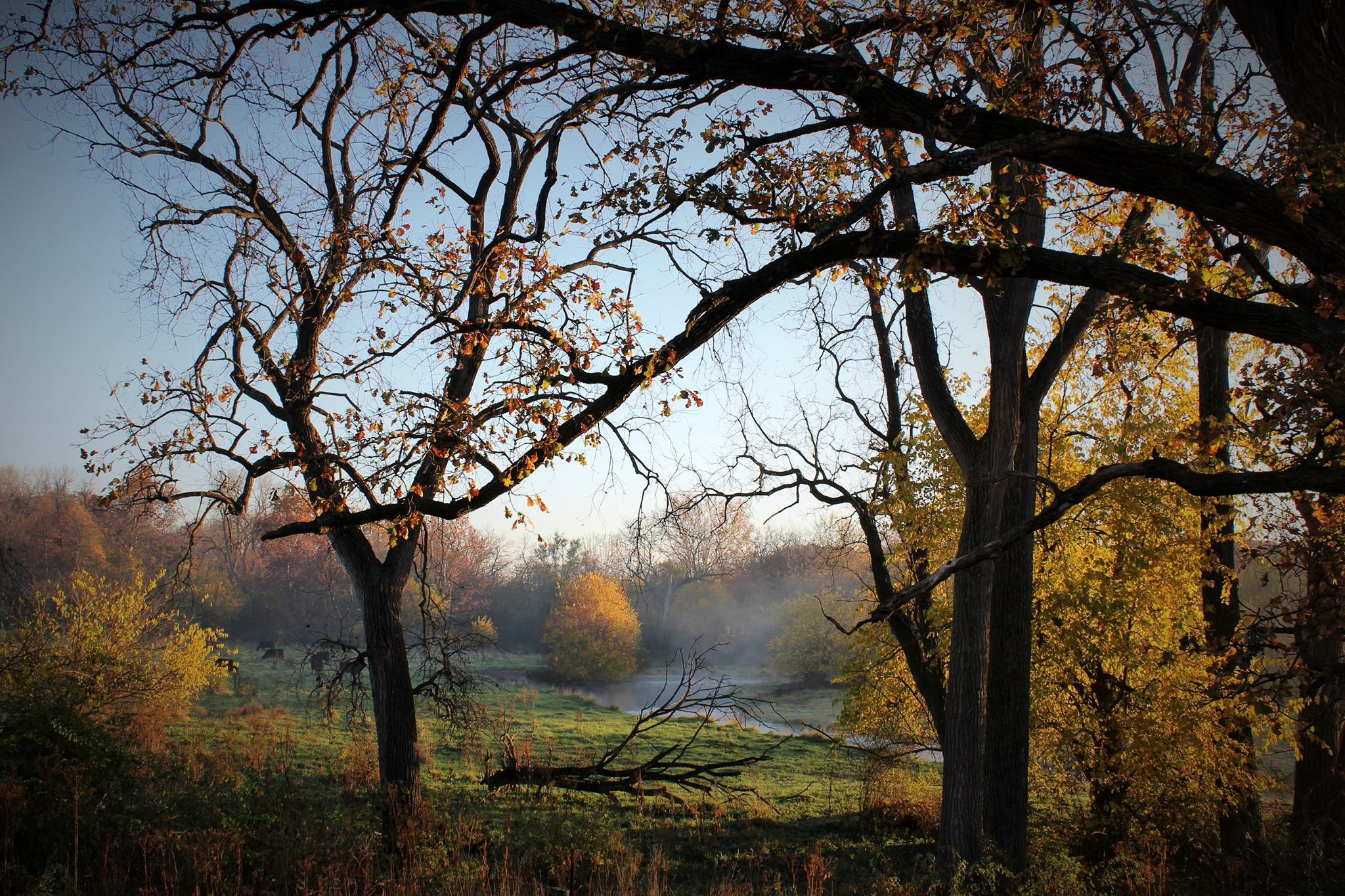 Trees in the Fall by Mike Wade